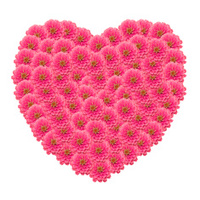 Frame Of Zinnias Flower Stock Photos Freeimages Com