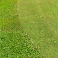 Green grass on a golf course