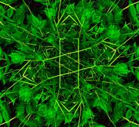 Vibrant Leaves Pattern