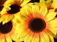 Sunflower fake
