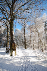 footpath in a snowy forest