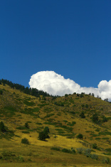 Meadows under blue sky- Stock Image