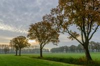 Oak trees in early morning fall light.