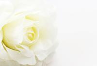 rose fake flower on white background