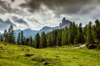 Italy, Dolomites - a wonderful landscape, meadow among pine