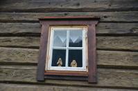Troll Window