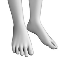 Foot anatomy artwork