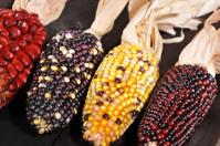 different maize-cobs