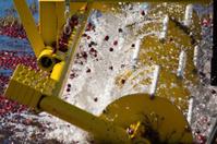 Yellow cranberry harvestor