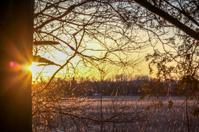 Sunburst frm tree