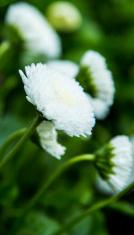 Garden, Spring, Flowers, Flora