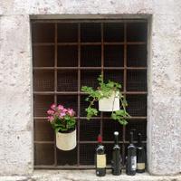 Window with Wine Bottles