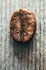 Fair Trade Coffee Bean Macro