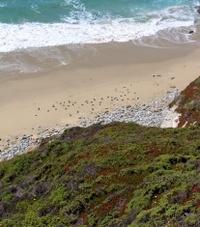 Gulls, beach, surf, green hills