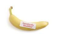GMO banana