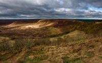 North York Moors, Goathland, Yorkshire, UK.
