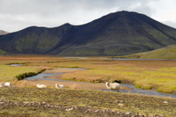 Landscape in Landmannalaugar,Iceland