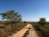 Field road, Russia