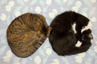 Sleeping cat pair