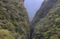 Brazil jungle