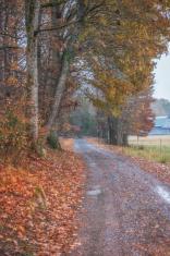 Autumn Gravel Road in Rain