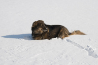 Dogs Midwinter Miseries