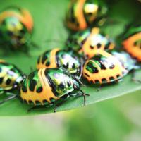 green ladybug in the backyard