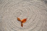 fallen leaves on sands