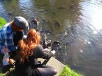 Children feeding  koi and common carp / splashing in lake