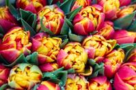 Ð¡olorful tulips bouquet