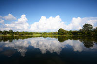 beautiful landscape reflections of cloud and tree
