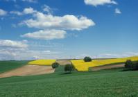 Fields  (image size XXL)