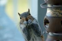 Squirrel Stealing Lunch