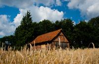 Barn with wheat