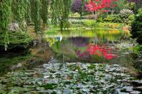 Silent pond.