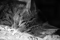 Sleeping Pussy Cat