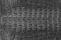 Crocodile Skin Texture Background.