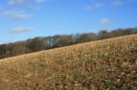 Otford Walk, Kent Countryside