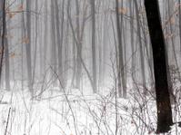 spooky foggy woods in an early morning scene