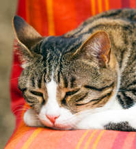 cute cat sleeping on a couch
