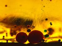 Turbulent Oil