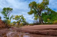 Beautiful Autumn Trees Utah Canyonlands Fall Landscape