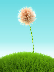 White clover flower in the grass on blue background
