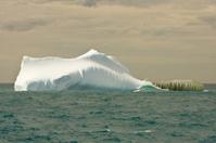 Iceberg afloat