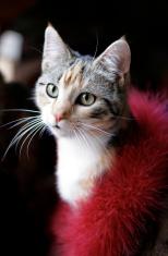 Glamorous cat in red boa