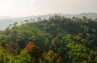 mountain tree landscape