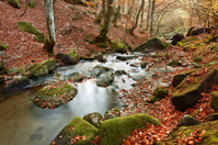 Creek in october