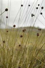 Button Grass Plain