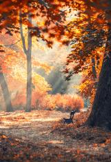 autumn city park with sunbeams