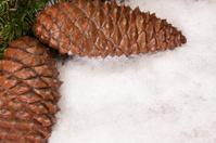 fir cones with powder snow